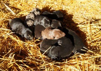 Annie's puppies