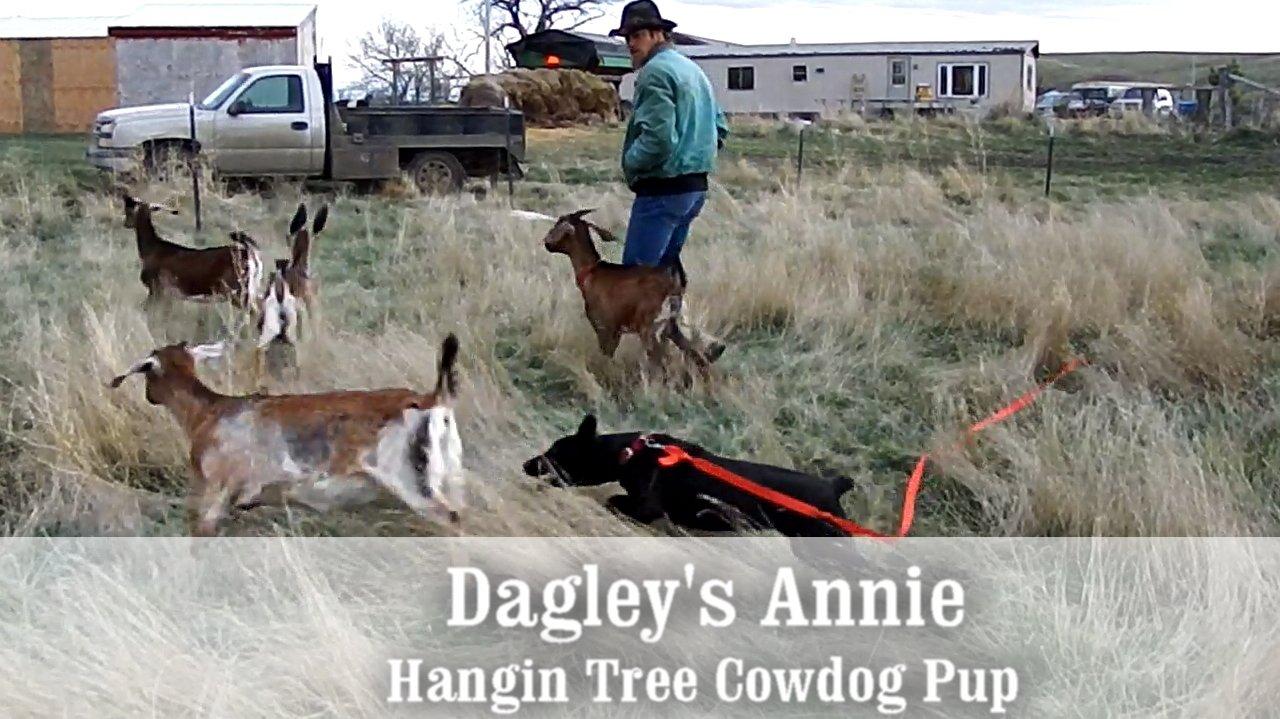 Dagley's Annie as a pup