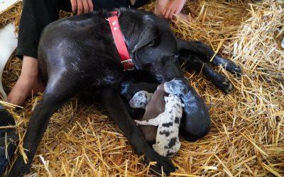 Hangin Tree Pups Born July 2020!