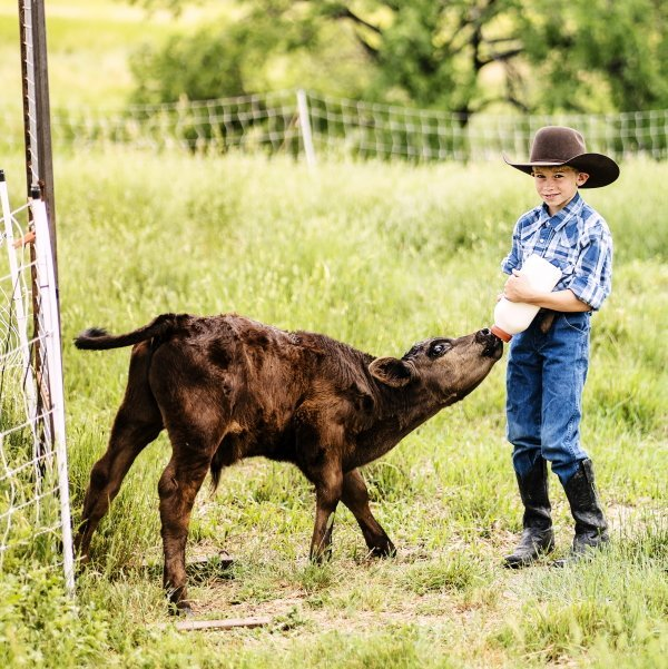 boy feeding a bottle calf