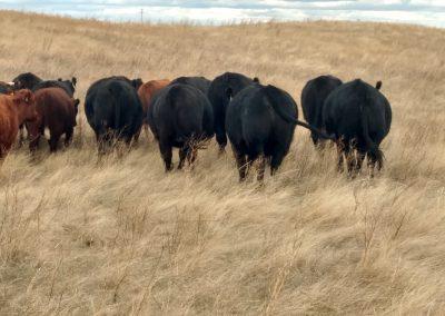 Grass Fed Beef near South Dakota